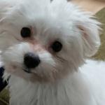 犬のアトピー 洋服は良い?悪い? – 正しい選び方